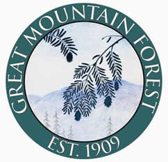 GreatMountainForest