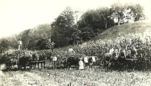 Harvest Time in West Norfolk